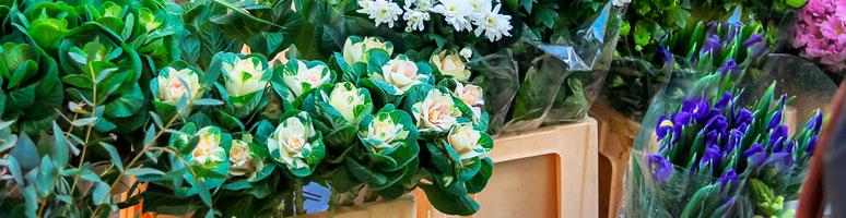 EenERPsysteemspecialontwikkeldvoordeimport exportvanbloemenenplanten.